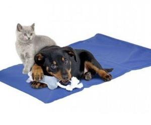 Productos para tu mascota