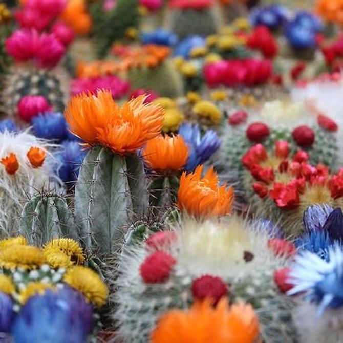 El desierto en tu jardín: los cactus