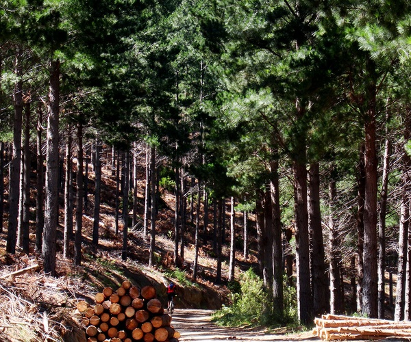 Madera para aserradero en Huelva | Explotaciones Forestales Lagarcía
