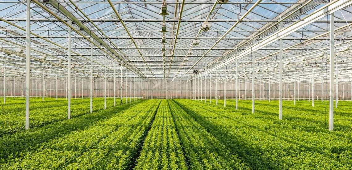 Climatización de invernaderos en Granada con eficiencia energética