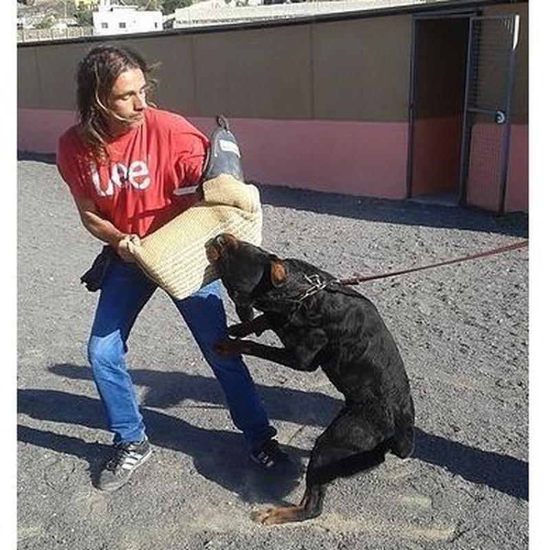 Adiestramiento: Servicios y accesorios de Residencia Canina y Adiestramiento Tarazona