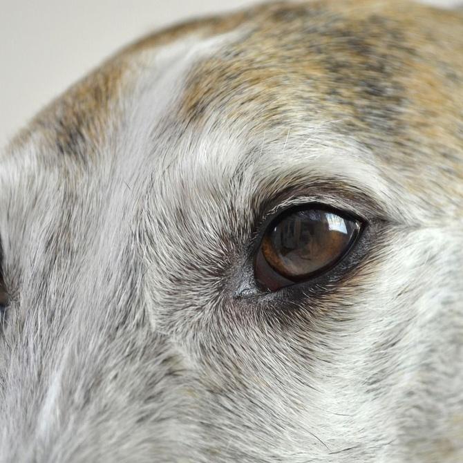 La vista en los perros: ¿cómo percibe el mundo tu mascota?