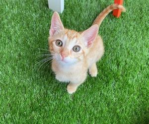 Can Exprés servicio veterinario a domicilio Zaragoza. Zeus recién adoptado ha sido testado de leucemia y panleucopenia con resultado negativo.