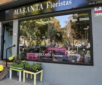 Naranjos: Catálogo de Flores Maranta