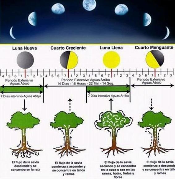 La luna y nuestras plantas