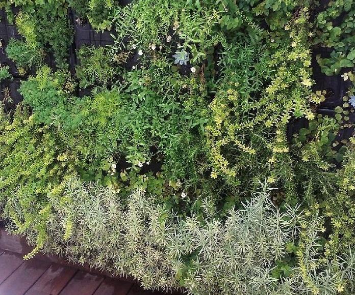 Vista próxima de módulo de jardín vertical en ático, meses después de colocado