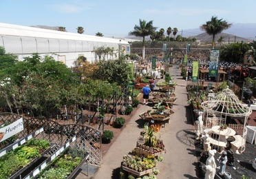 Árboles y plantas