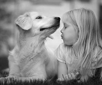 Formación y prácticas en Peluquería canina: Servicios de Clínica Veterinaria Habana Boston