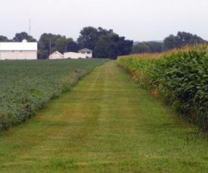 Ingeniería y proyectos : Servicios de Agroambiental Bullaque