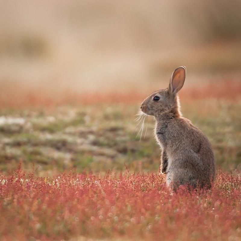 Control de conejos: Control de Plagas de Sanfer