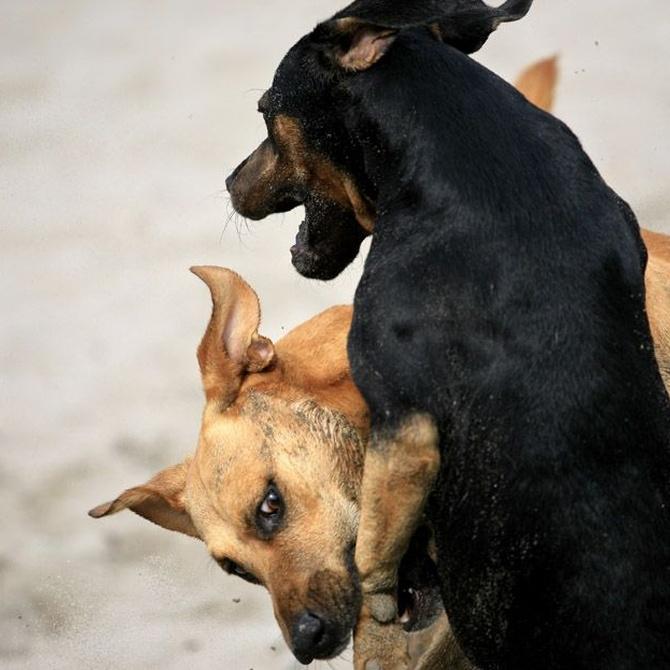 Un perro mordido por otro