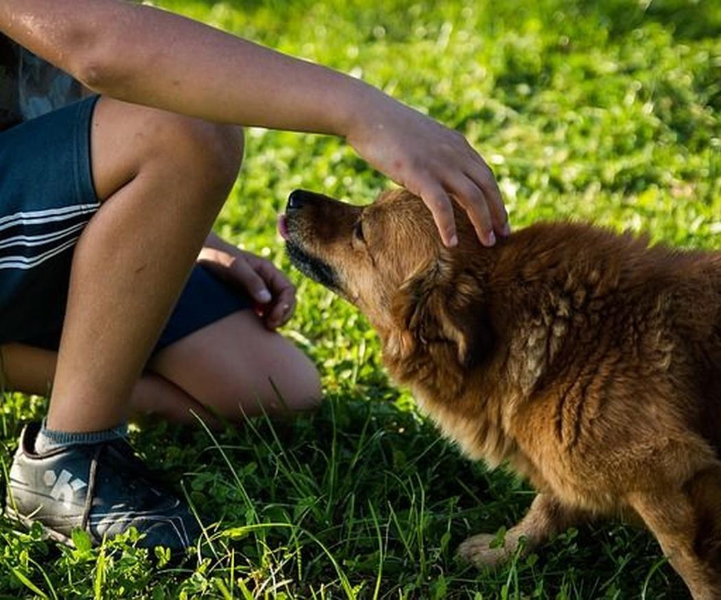 ¿Cuáles son las mejores mascotas para la convivencia con niños?