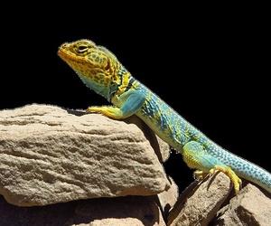 Tráfico de reptiles