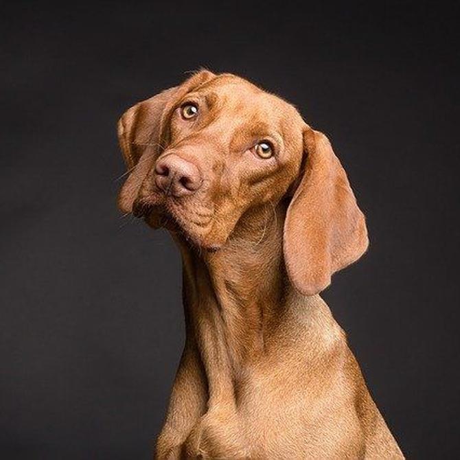 Terapias de rehabilitación para mascotas