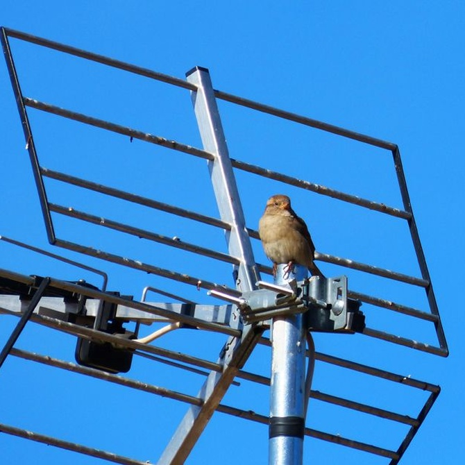 ¿Problemas con tu antena?
