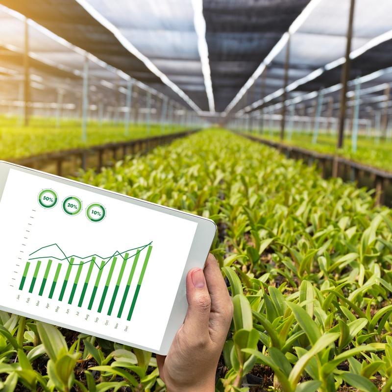 Asesores fitosanitarios: Nuestros productos de FITOPALMA, S.L.