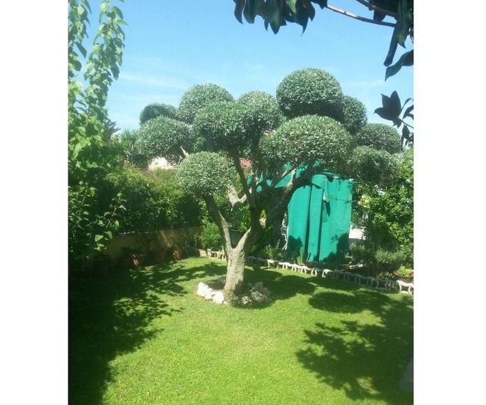 Jardinería: Servicios de Serveis Carreras