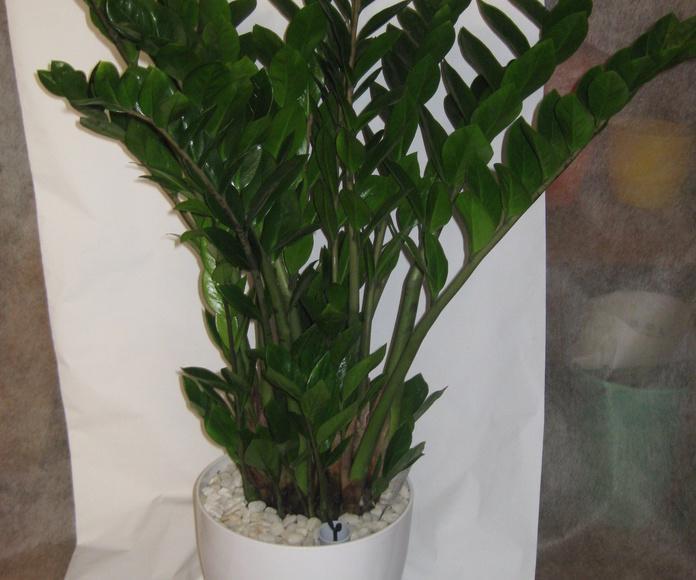 plantas en madrid centro