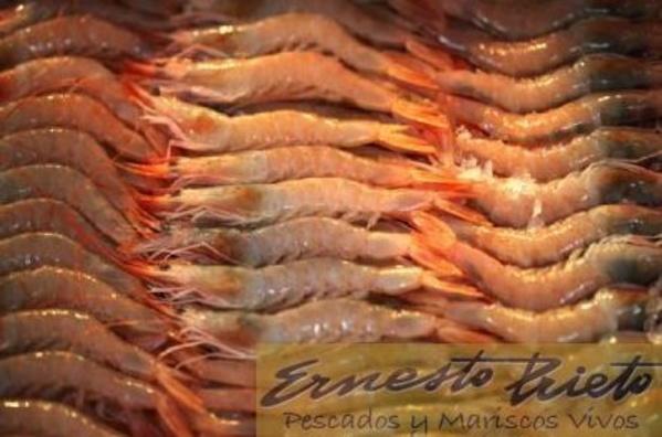 Gamba para plancha: Catálogo de Ernesto Prieto