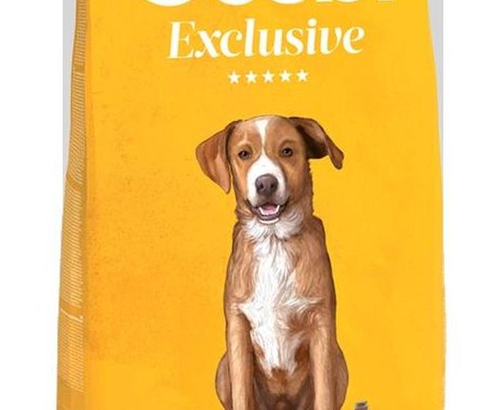 Exclusive Lamb&Fish Junior: Productos y servicios de Més Que Gossos