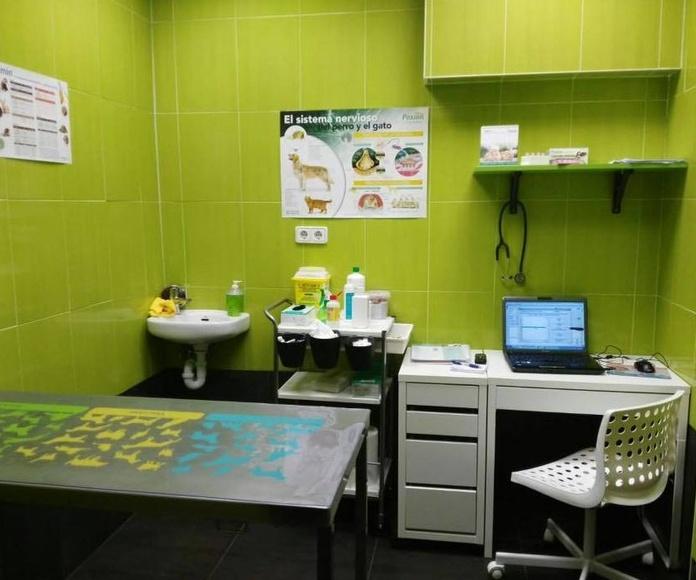 Servicio de radiología: Servicios de Clínica Veterinaria Sarriguren
