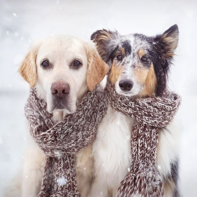 El invierno y el cuidado de tu perro