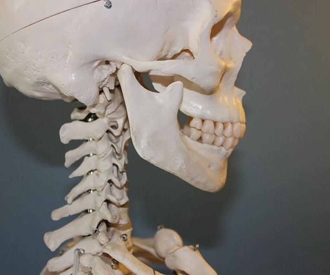 ¿Cómo influye la mandíbula en la salud y el atractivo?