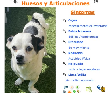 El Cuidado de TU Mascota  Huesos y Articulaciones: Síntomas