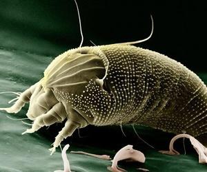 Los ácaros del polvo y cómo eliminarlos