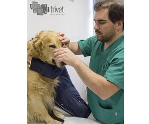 Oftalmología veterinaria en Cuenca