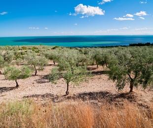 Plantación de frutales, almendros y olivos