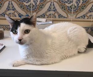 El título seria can exprés servicio veterinario a domicilio Zaragoza:gatito de 14 años diabetico, en tratamiento con insulina administrada por sus cuidadosos dueños