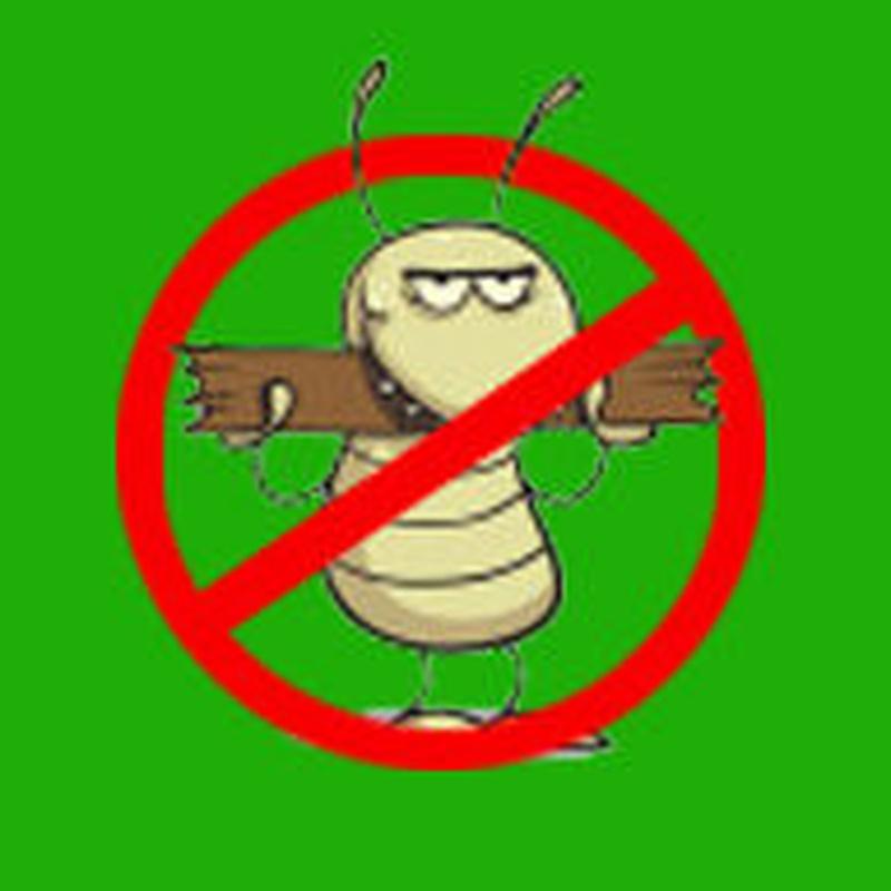 eliminar termitas alicante