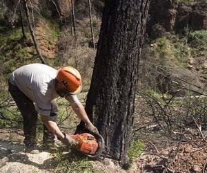 Tala de árboles en Barcelona