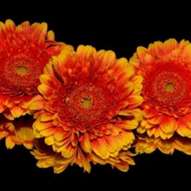 Celebrar el otoño con flores