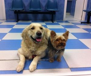 Viajar al extranjero con tu perro: el pasaporte veterinario