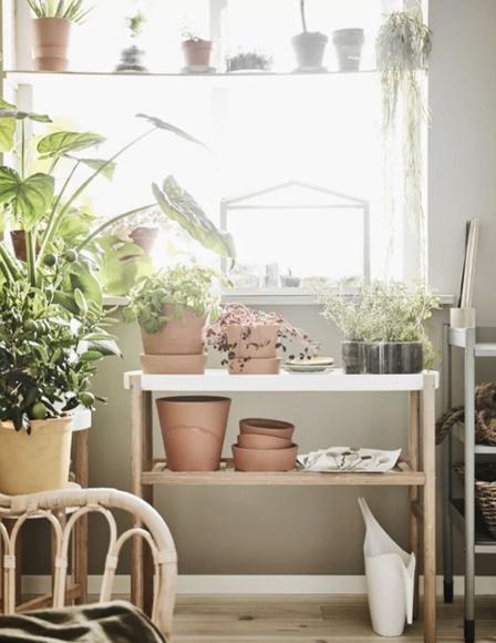 Crea tu propio huerto en casa