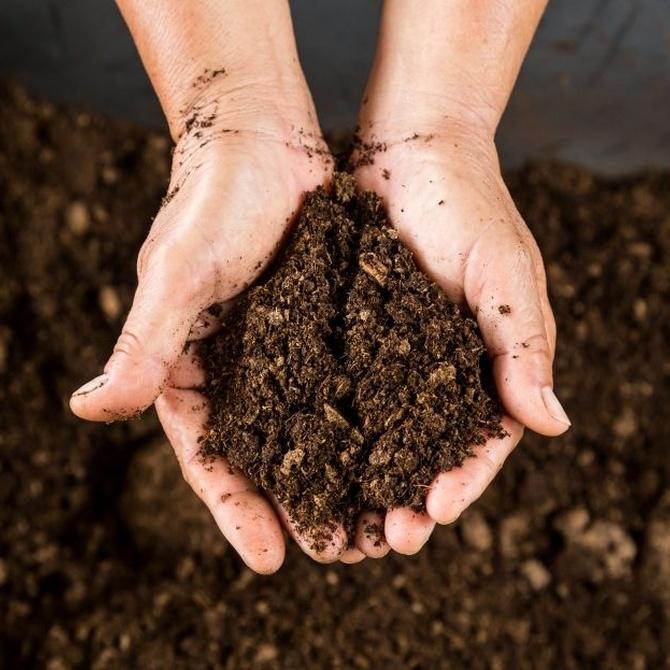 Fertilizantes naturales que tú mismo puedes preparar