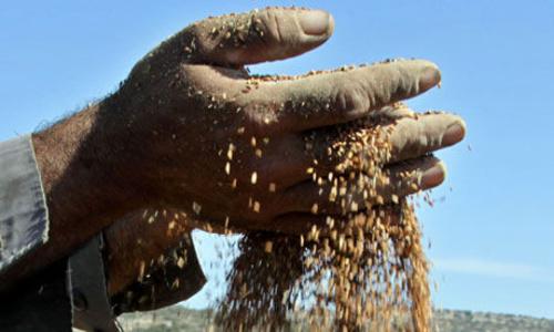 Fotos de Semillas en Añover de Tajo   Agroceres, S.L.