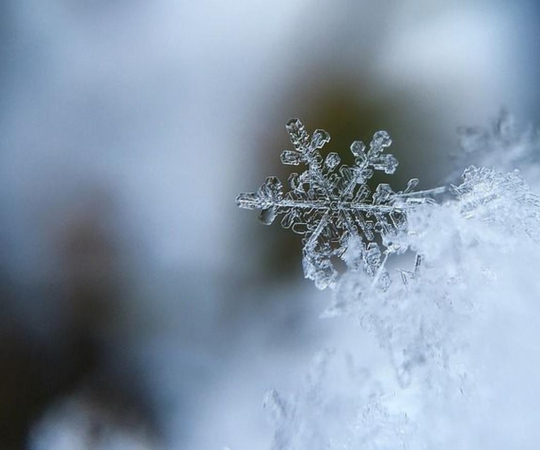 Ventajas del tratamiento con frío de los alimentos