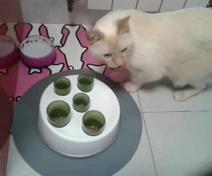 Bowie gatito vomitador utilizando comedero de glotones,así come de poquito en poquito