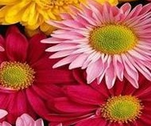 Perfumes de mujer florales ¡los favoritos entre las españolas!