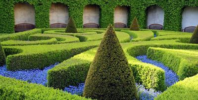 Jardinería: Jarmant Versalles