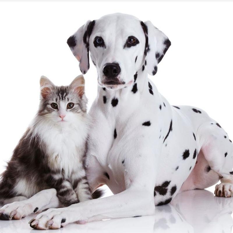 Peluquería: Servicios veterinarios de Clínica Veterinaria Dobermann II