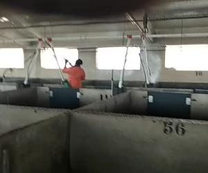 Especialistas en espumado y desinfección de naves ganaderas