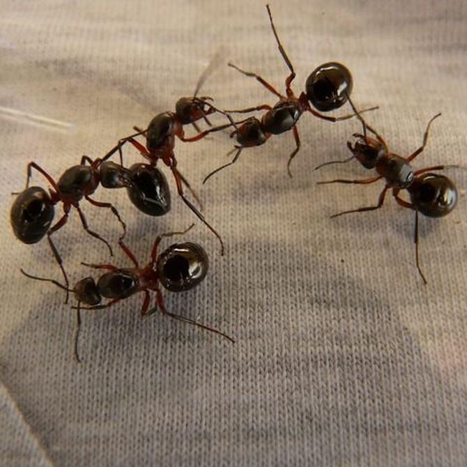 Las plagas más comunes en el hogar