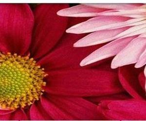 Galería de Floristerías en Ordes | Flores Abellá