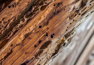 Tratamientos de termitas