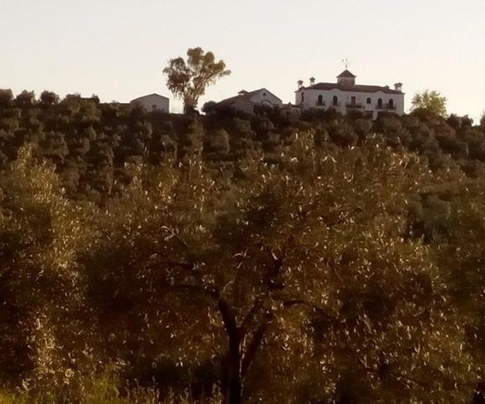 Venta de finca de olivos más almazara: Inmuebles Urbanos de ANTONIO ARAGONÉS DÍAZ PAVÓN