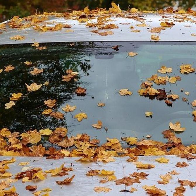 Cómo limpiar la luna del coche